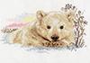 Северный медвежонок